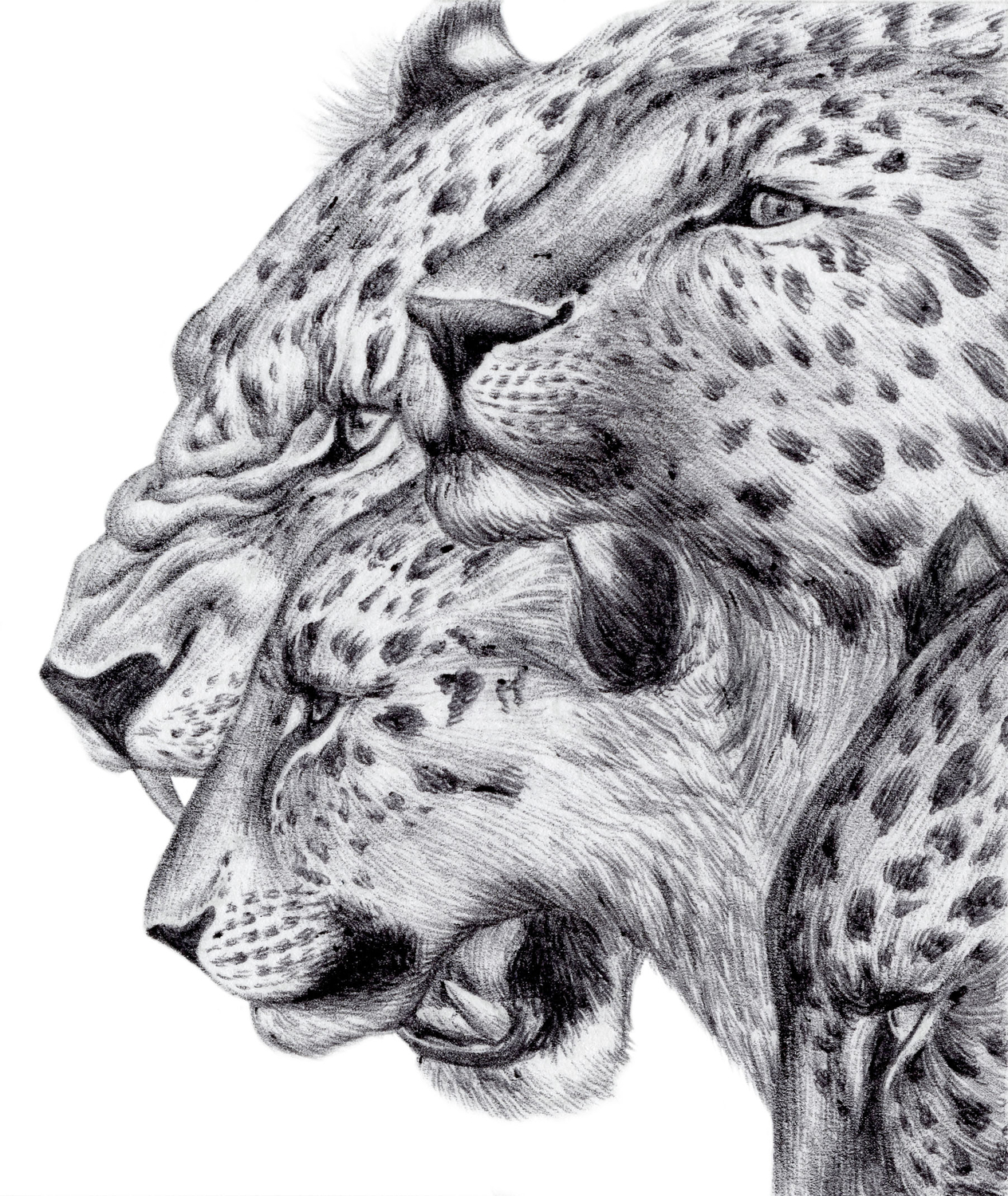 Amur Leopards Artwork by Shawn E Russell